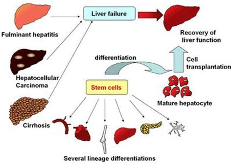 Research paper on hepatitis c treatment